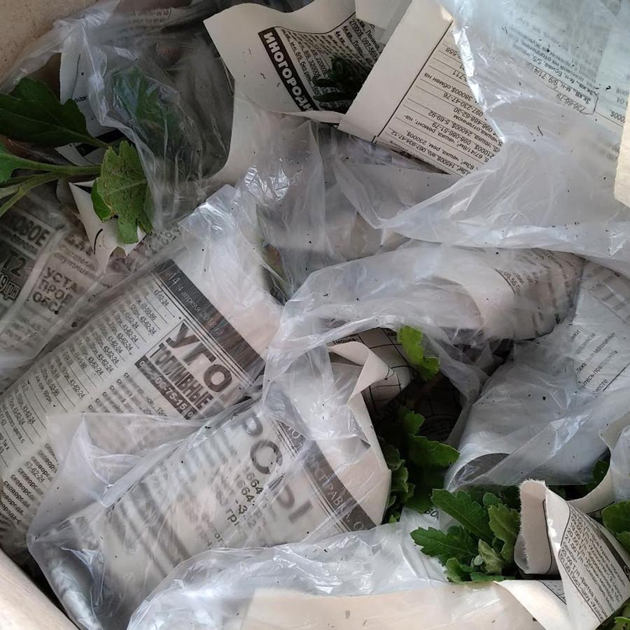 Хризантема черенок, упаковка