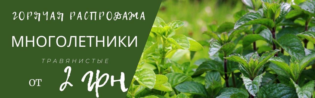 Травянистые многолетники акция от 2 грн